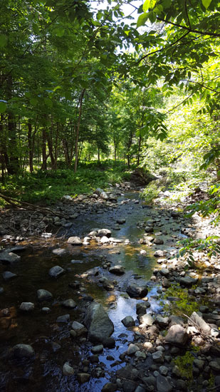 Mink Brook: Hanover, NH