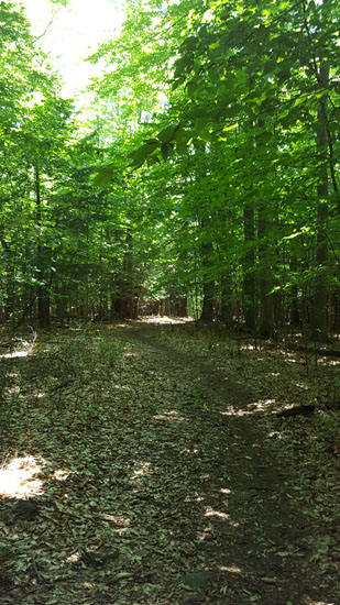 woodsy walk