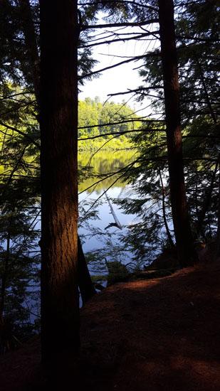 ct river pine park1