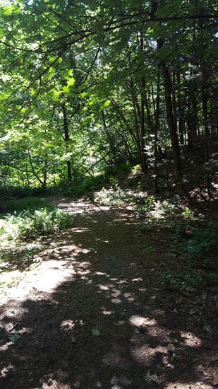 pine park3