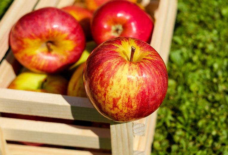 apple-bin