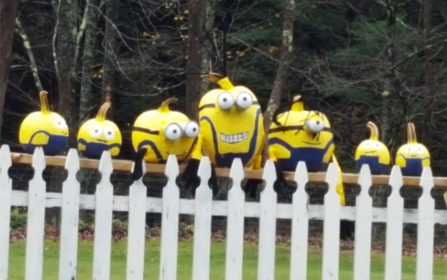 Brighten Your Day: Check Out the Plainfield Pumpkin People