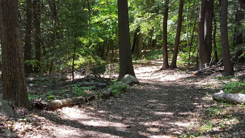 A Meander Through the Woods in the City: Starr Hill
