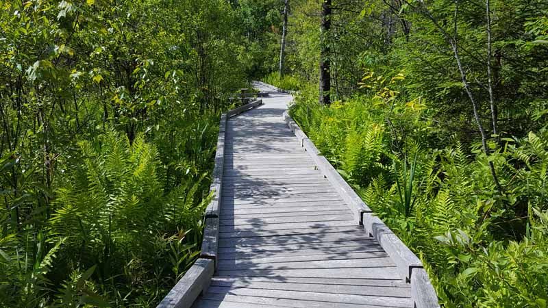 A Hidden Floral Treasure You Have to See: Eshqua Bog Nature Area