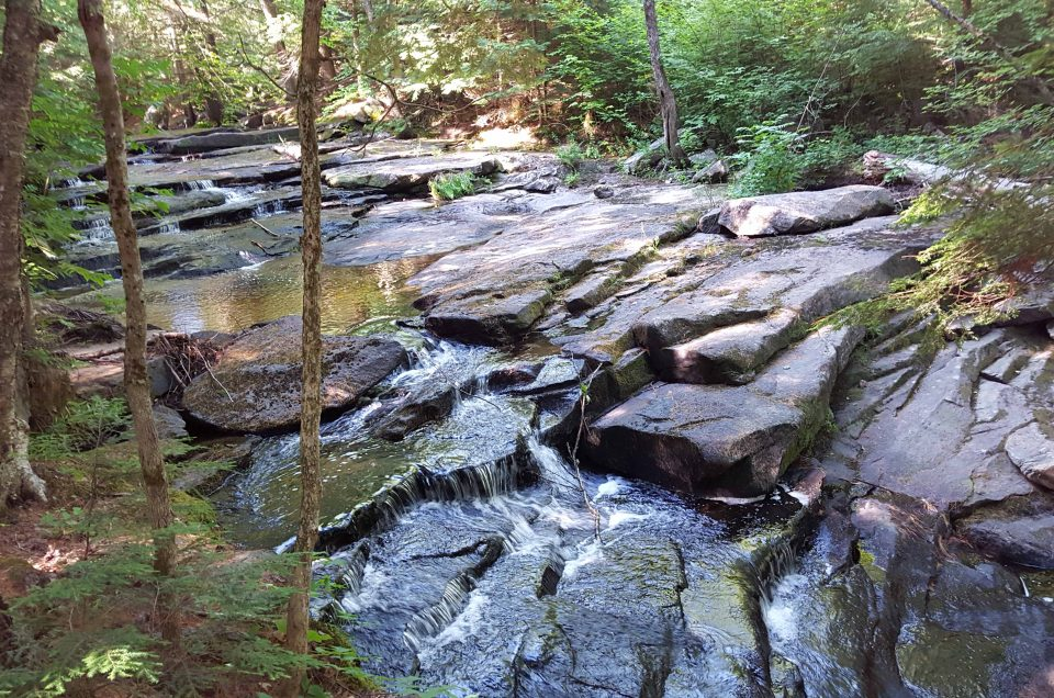 A Slice of Solace in the Woods: Colette Trail