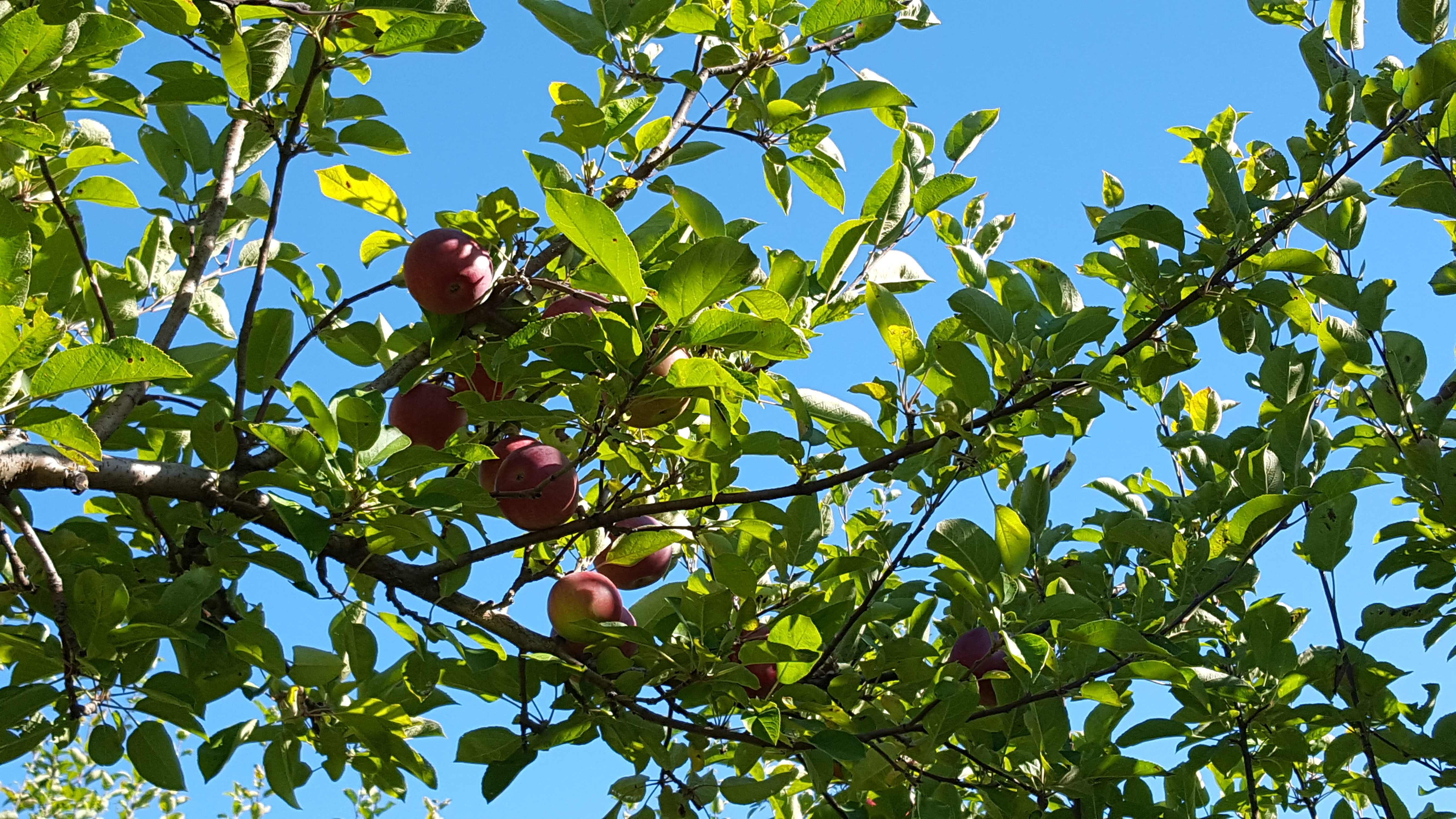 Places To Go Apple Picking In And Around The Upper Valley Upper