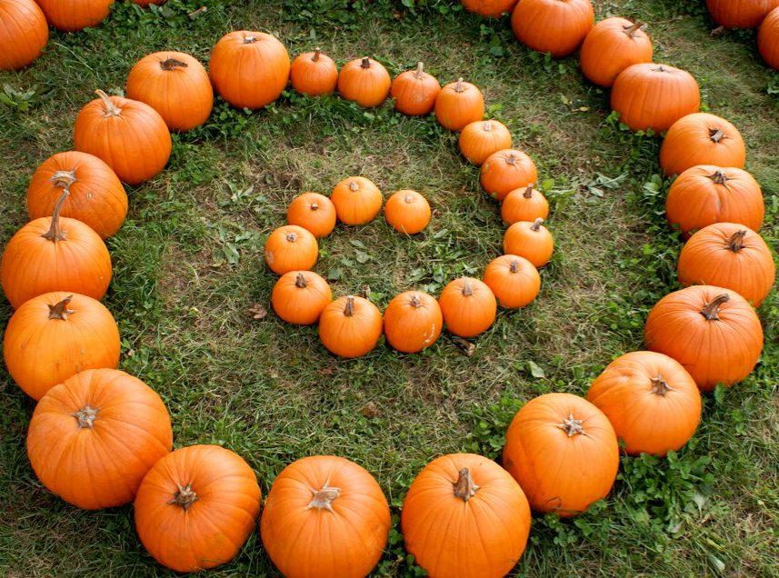 Pick Your Own Pumpkins in the Upper Valley