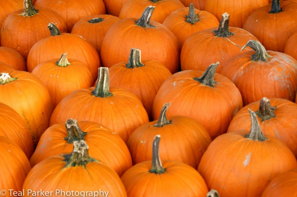 A Quick Pick: Pumpkin Picking in the Upper Valley
