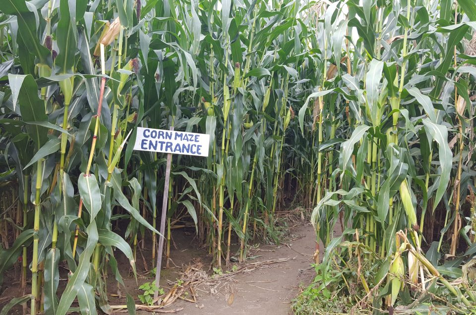 Corn Mazes in and Around the Upper Valley