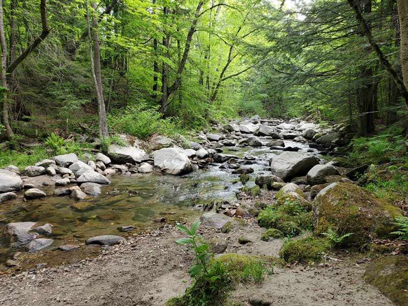 Goodwin Park: Trails You'll Want to Explore Again and Again